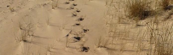 cropped-pasos-en-la-arena1.jpg